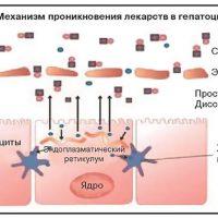Механизм проникновения лекарств в гепатоцит