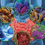 Микробиом как орган человека