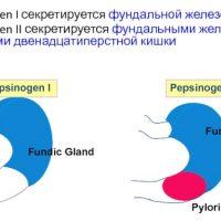 Пепсиноген